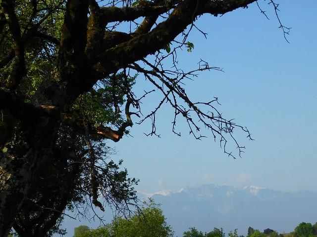 07-08/05/2018 Balade alentours ... Mont Pèlerin ... Vevey  Lac Léman