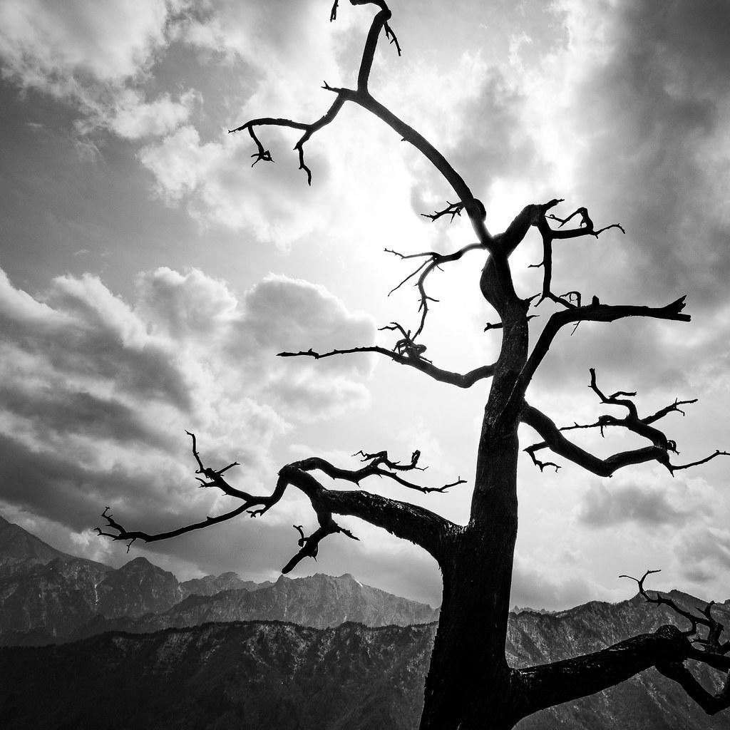 The Tree, Seoraksan, South Korea picture