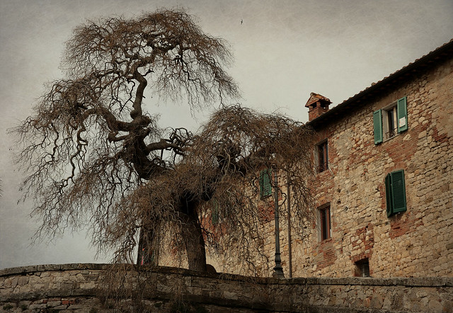 IMG_7491 L' albero del borgo...