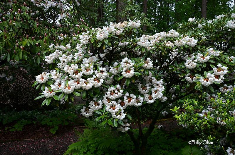 cecil-smith-garden-2
