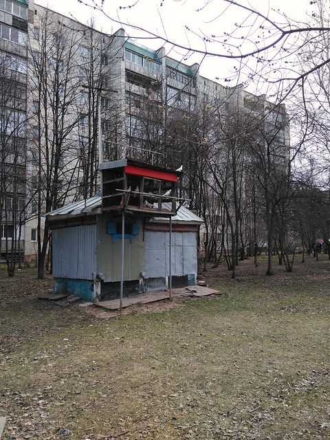 Operational dovecot in Tomsk