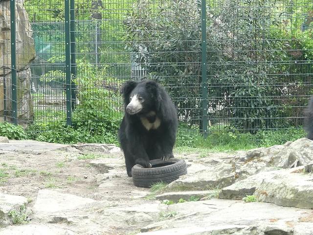 Lippenbär, Zoo Berlin