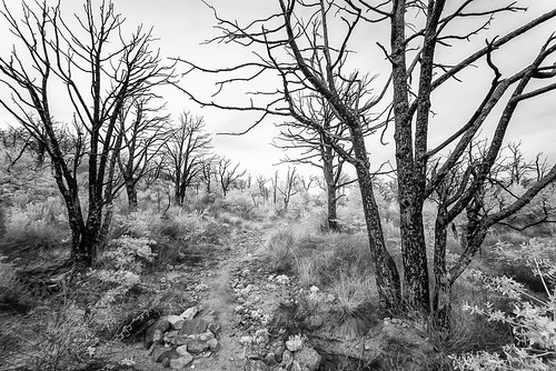 clarkspringtrail huachucamountains coronadonationalforest cochisecounty arizona az usa infrared monumentfire