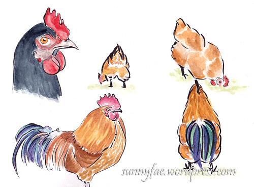adventure playground chicken sketch