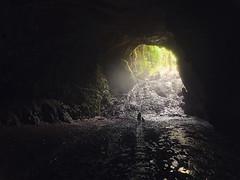 Way out 【浪遊旅人】https://ift.tt/1zmJ36B #backpackerjim #underground #cave #forest #vertical #limestone #grubug #jomblang #yogyakarta #indonesia