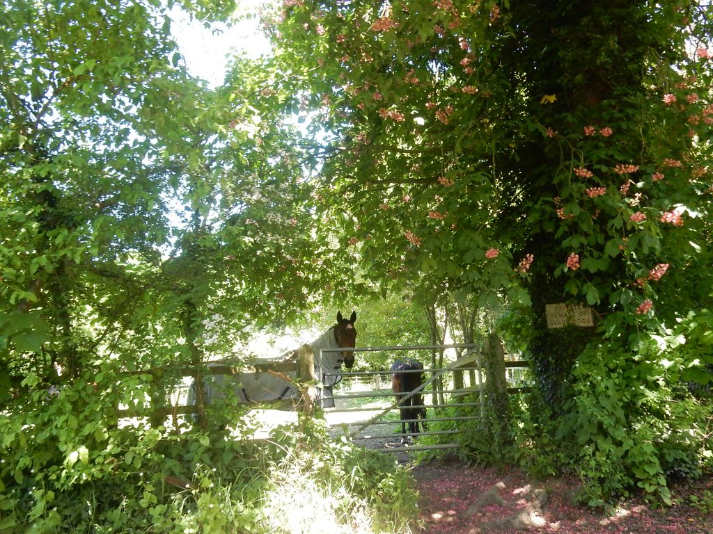 Horses in the shade Roydon to Sawbridgeworth