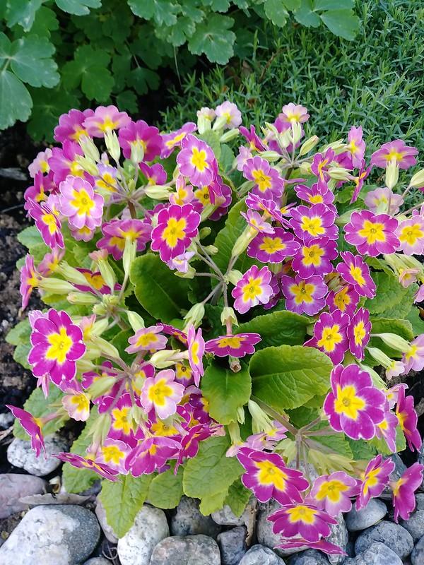 Le jardin de Lavandula 2018 - Page 6 42240586501_aaec727889_c