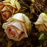 El final de Temps de Flors