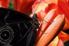 Papillons en Liberté 2018 - Photo 25