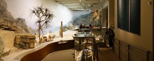 Prehistoric Hong Kong, Hong Kong Museum of History. From History Comes Alive in Hong Kong