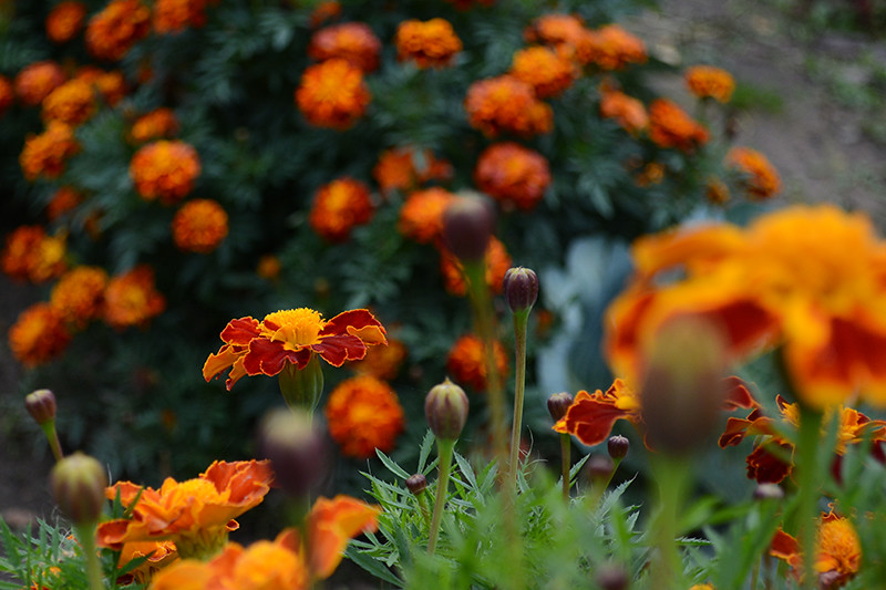 цветы дождь 26