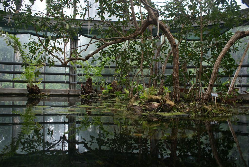 Serre tropicale avec une mangrove dans le jardin botanique de Naples.