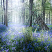 Bivouac in the Bluebells by SimonBaker5