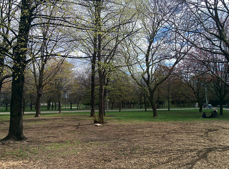 Turning green #toronto #spring #trinitybellwoods #parks #latergram