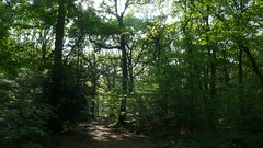 Promenade en forêt de Roumare