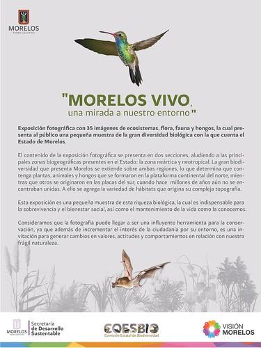 Morelos Vivo, una mirada a nuestro entorno