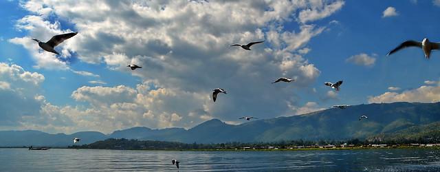 Following seagulls