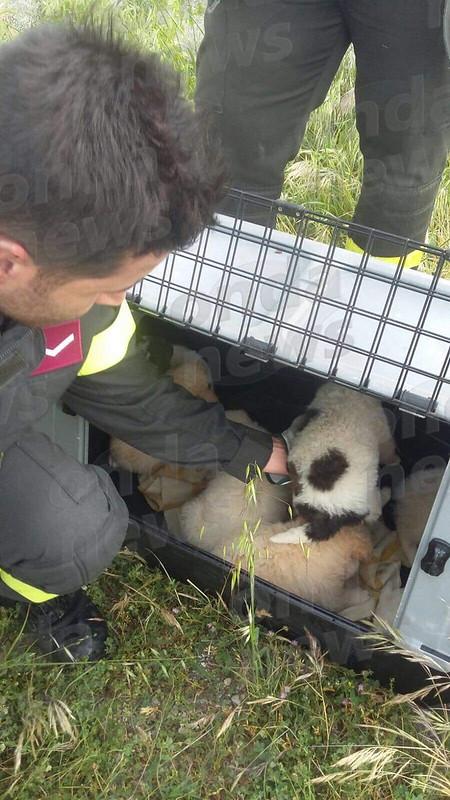 Cagnolini salvati dai Vigili del Fuoco 1
