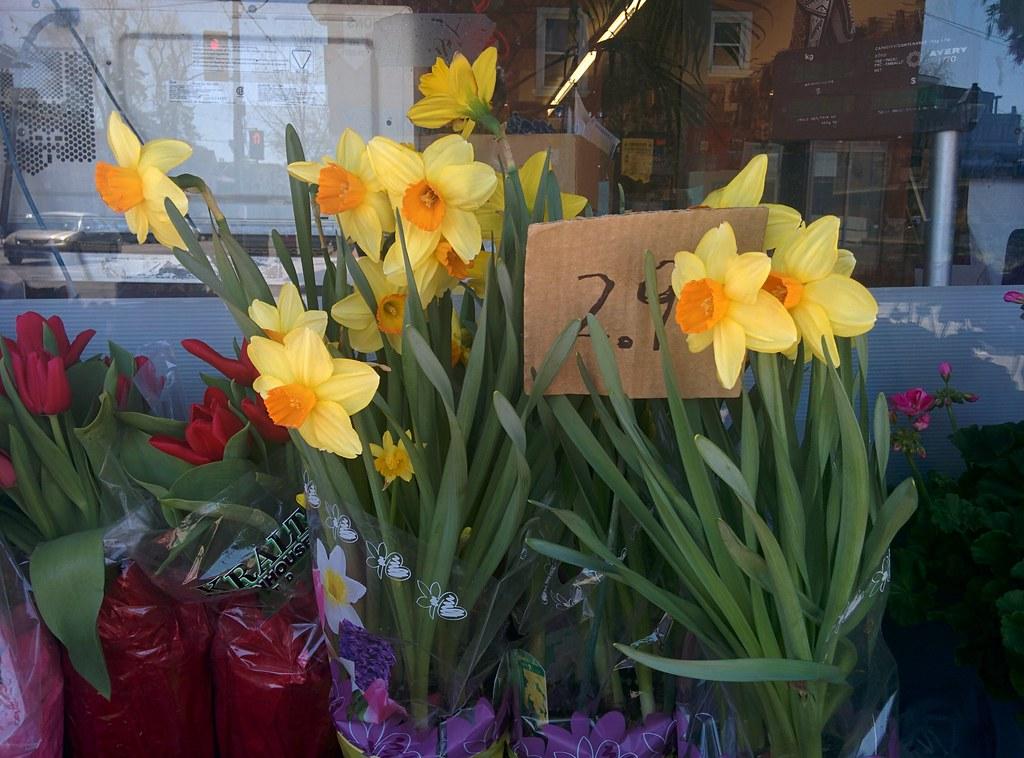 Daffodils @ $C 2.99 #toronto #dovercourtvillage #flowers #dovercourtroad #hallamstreet #daffodils #latergram #77foodmarket