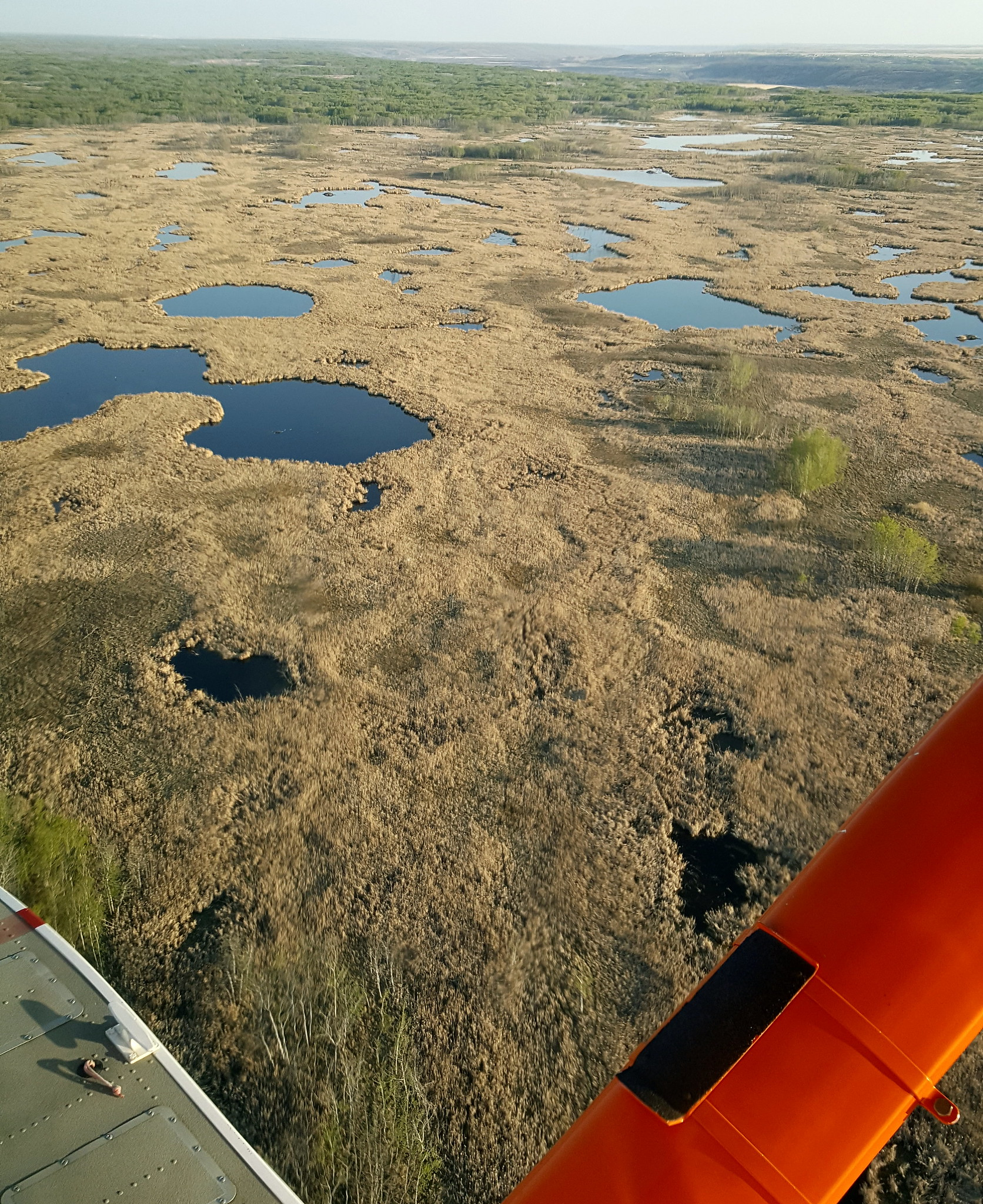 Jeff snapped a photo of one the few remaining areas of all natural wetlands (notice no roads and no agriculture) in southern Saskatchewan and Manitoba! Photo Credit: Jeff Drahota (USFWS).