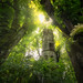 The Green Tower by @hipydeus