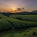 Sunset at Ankole Tea Plantation, Uganda, June 2017