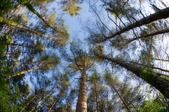 vertige d'arbres-9416-1-2018
