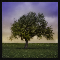 Greenfields Tree
