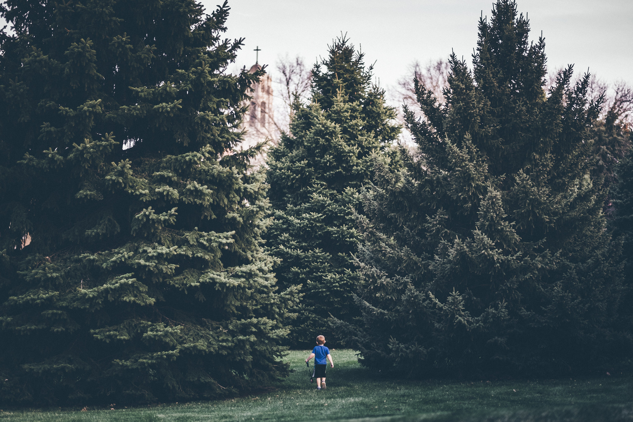 Ezra in the trees