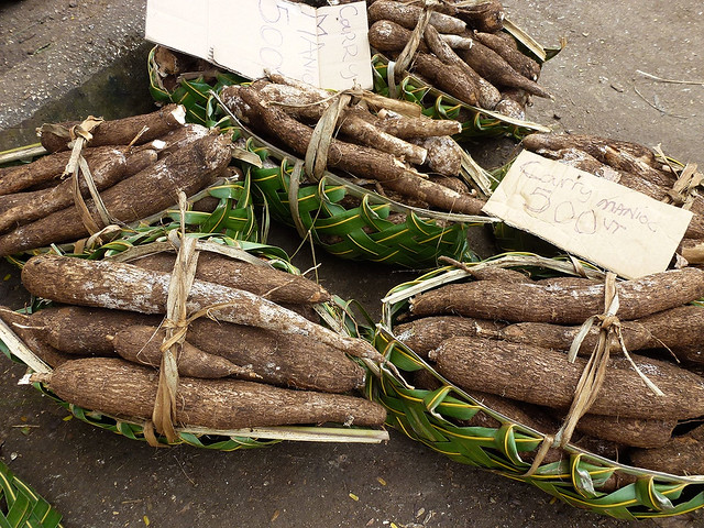 Traditional crops such as Yams are valued by Melanesian peoples and form an essential part of their societal fabric.