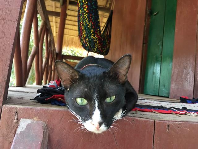 宿の部屋によく遊びに来た猫