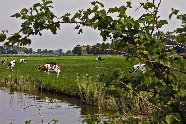 Frysian landscape near Grote Wiske ... (9892)