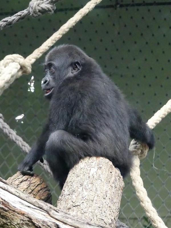 Zoo Frankfurt - 15.05.18