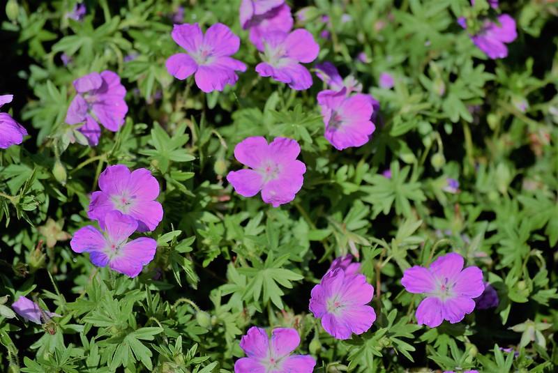 Flowers 22.05 (5)