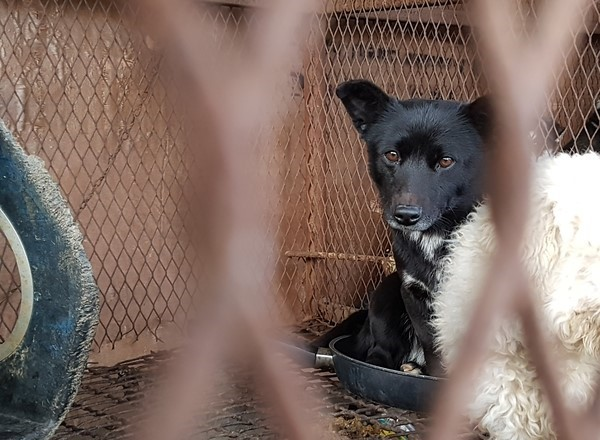 Yangsan Dog Farm Rescue - Available for adoption