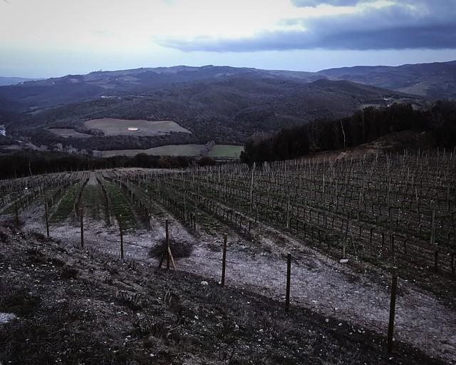 vineyard-montalcino-cr-ciutravel