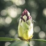 20180513-145609 - Spring Garden Bokeh - Kreis Segeberg - Schleswig-Holstein - Deutschland