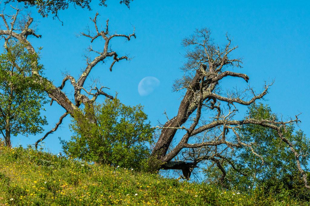 Moonset In The Algarve Hills