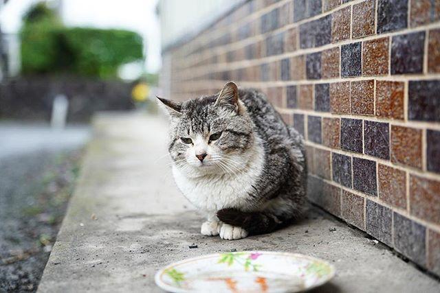 ニャッス!(まだまだ撮った猫の写真はある) #猫 #cat #sony #α7 #α7r3 #sigma #sigmalens #sigma2470f28 #sigma2470f28art #一眼レフカメラ #カメラ #カメラ好きな人と繋がりたい #写真撮ってる人と繋がりたい #α7r3撮影