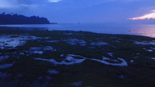 Dugong feeding trail in seagrass meadows, Pulau Sekudu, May 2018