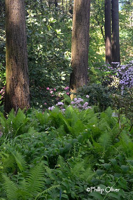 cecil-smith-garden-1