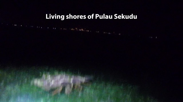 Various marine life on the living shores of Pulau Sekudu