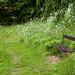 A Quiet Bench 9944