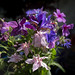 bouquet of jewel colours by Wendy: