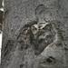 Chroniques d'Angrignon   Mom and her owlet   Amandine et son rejeton au no 6   Petit-duc maculé femelle et son juvénile   Parc Angrignon   Arrondissement Sud-Ouest   Montréal [Explore   2018-04-29   M02] by sylvain.messier