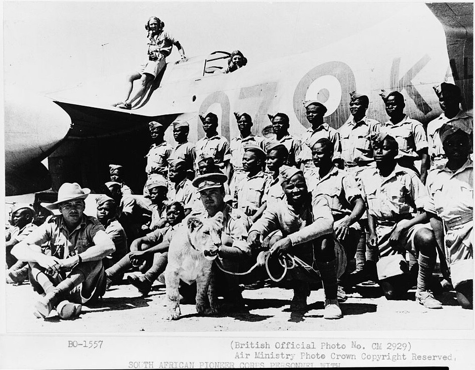 South African Pioneer Corps personnel with Dolly, their lioness mascot at desert landing ground, [and a Boston bomber] c1942.