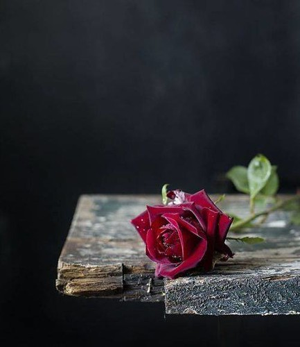 Photo A Single Red Rose Ana Rosa From My Tumblr Blog Firepower