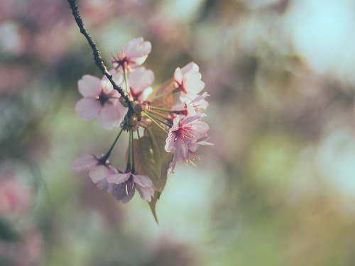 Life feels sweet when looking at spring blossoms
