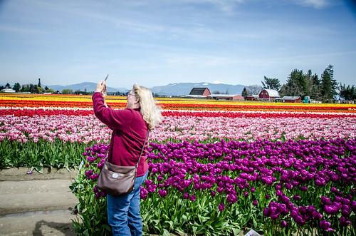 Skagit Valley Tulips-51