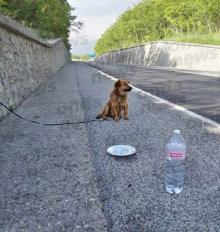 cane-abbandonato-sanza-2